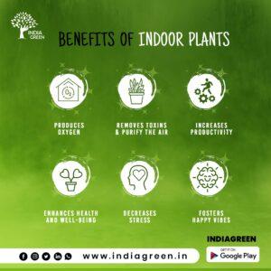UrbanFilters - IndiaGreen 14