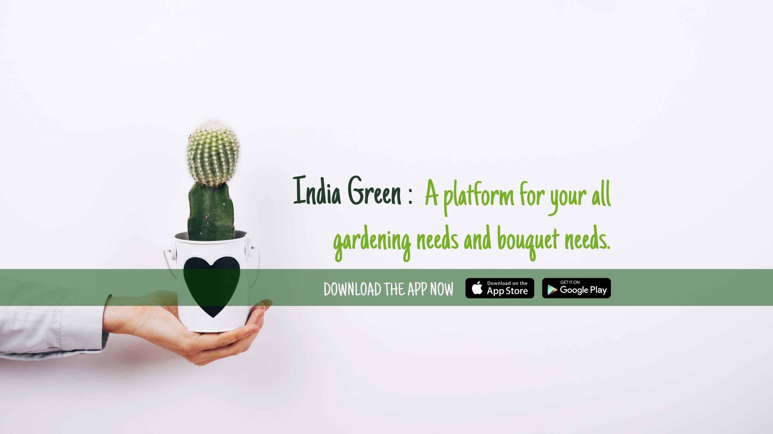 Indiagreen Extensive Branding