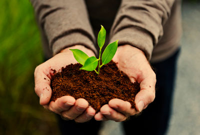151+ Organic food Marketing Slogans and Taglines